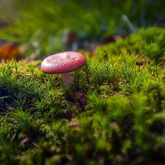 Bizkaia Paseando por el bosque_Txapela