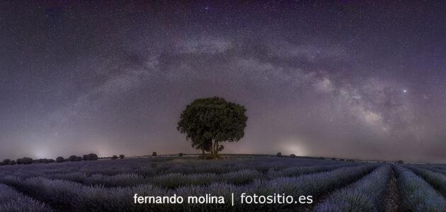 Campos de lavanda con Vía Láctea.