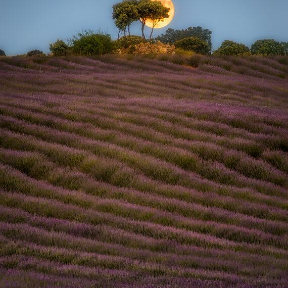 Guadalajara Luna con árbol